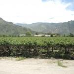 Vignobles à 1600 mètres