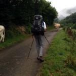 départ face aux vaches non gardées