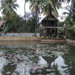 étang de lotus