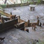 les babouins à l'affût