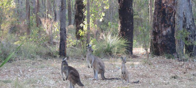 Western Australia et le bush