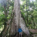 devant un ceiba, l'arbre national