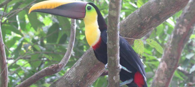 Costa Rica : ses parcs nationaux