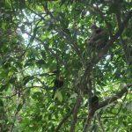 Toucan et paresseux