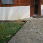 Iguanes! fermer la porte